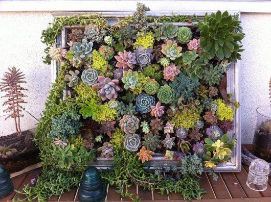 Plantas de várias cores são ideais para compor um lindo quadro vivo para decorar a sua casa