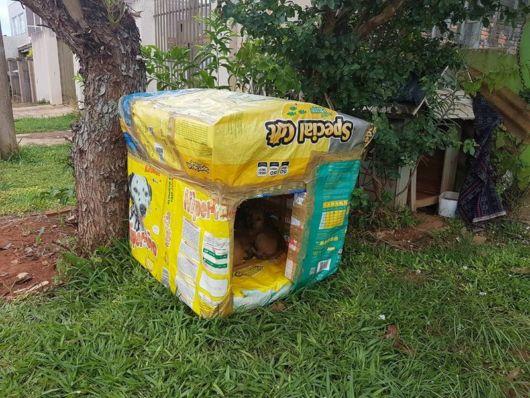 Essa casinha tem até plástico revestido