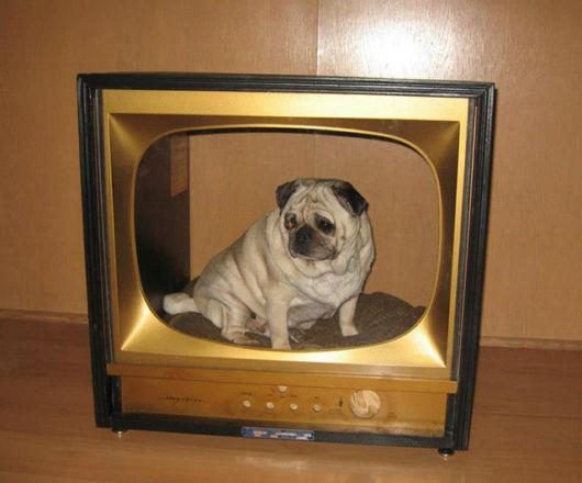 Use a carcaça de uma TV para criar uma casinha de cachorro