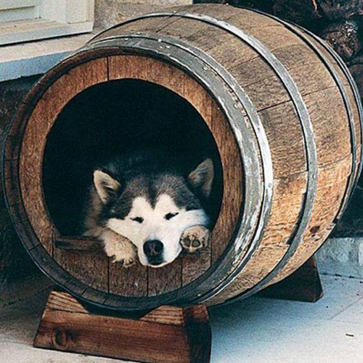 Até um barril pode ser utilizado como casinha para seu cachorro