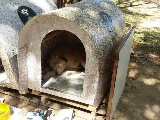 Faça uma casinha para cada cãozinho e deixe que eles tenham seu próprio espaço