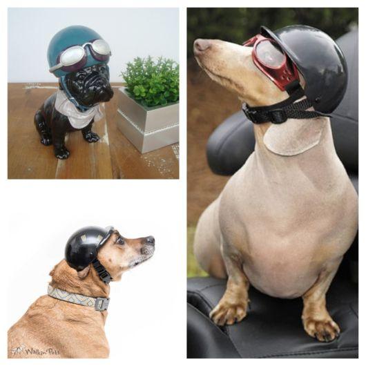 Diversos modelos de capacete para cachorro + ótimas dicas