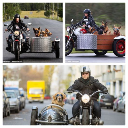 Modelos de sidecar para transportar cachorro