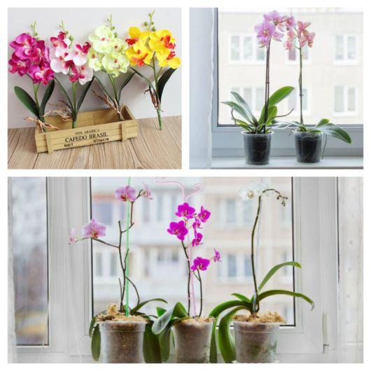 As orquídeas são versáteis e belas