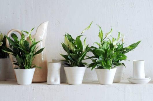 Plantas pequenas – 10 espécies ideais para quem tem pouco espaço!