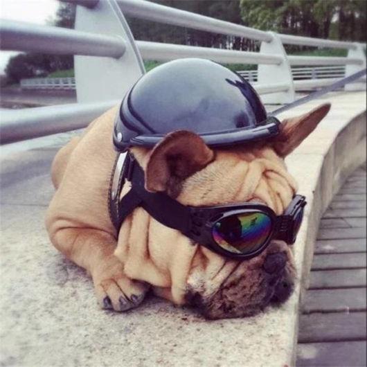 capacete para cachorro