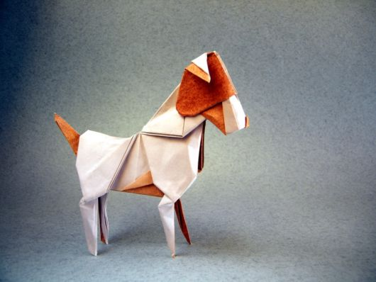 dobradura de cachorro