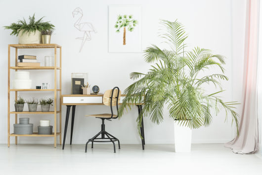 Vaso grande com palmeira ráfia