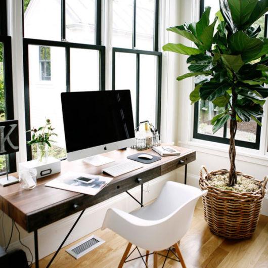 plantas para escritório