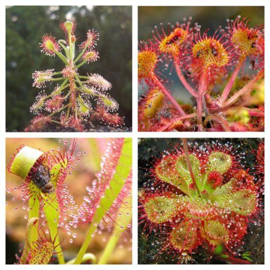 Essa planta possui um aspecto diferente e peculiar