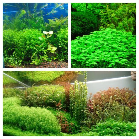 Plantas aquáticas