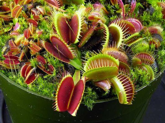 Tudo sobre plantas carnívoras