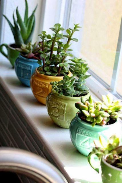vasinhos de suculentas nas cores verde, amarelo e azul.