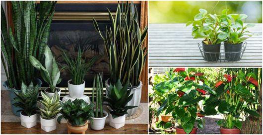 Plantas verdes e floridas