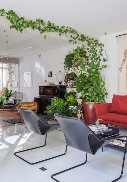 Plantas ornamentais para sala