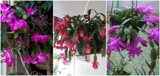 planta pendente com flor