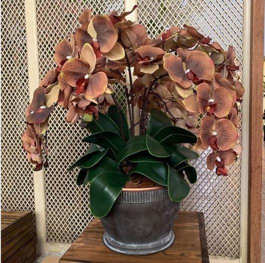 arranjo de orquídeas
