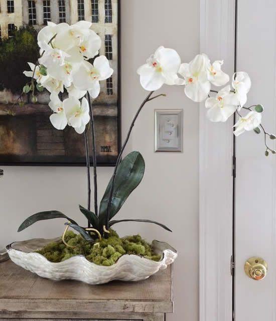 sala com orquídea branca