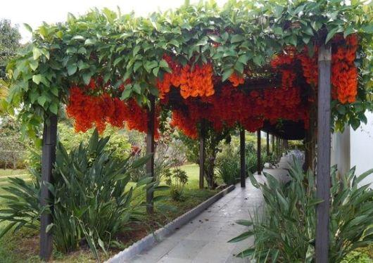 planta com flor para caramanchão
