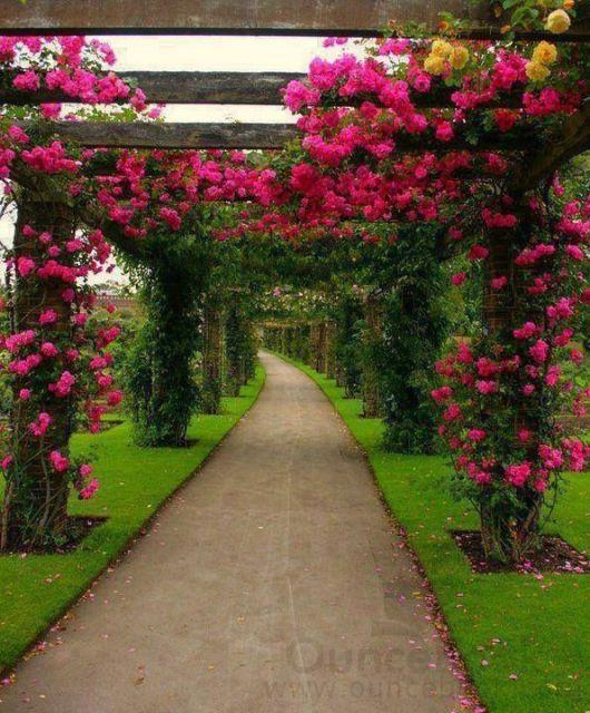 caminho com trepadeira florida