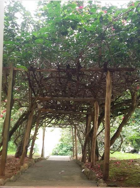 estrutura rústica com planta