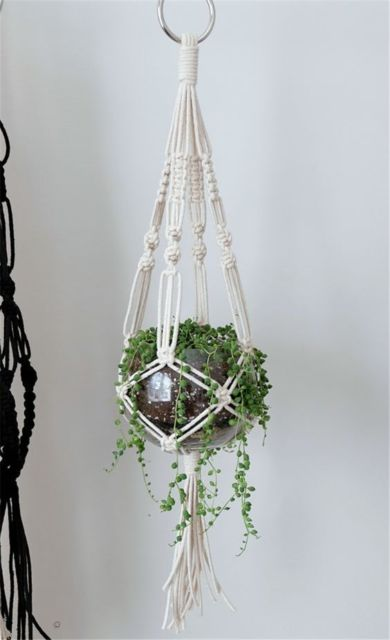 aquário com planta pendente
