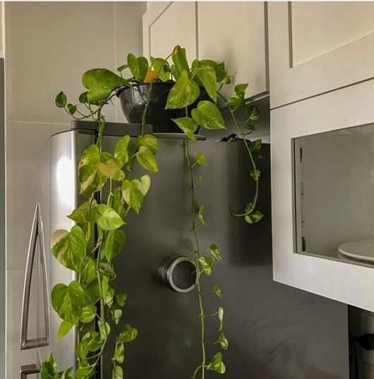 cozinha com decoração simples