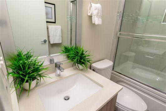 plantas para banheiro pequeno