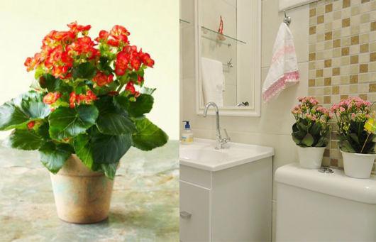 Kalanchoe na decoração do banheiro