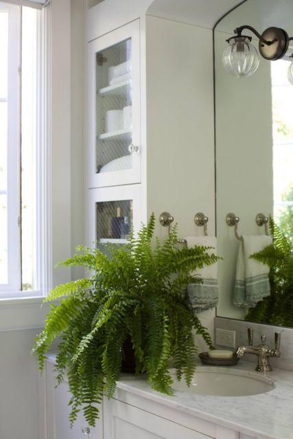 Samambaia na decoração do banheiro