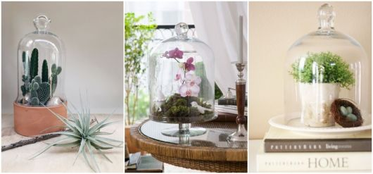 ideias para usar plantas na decoração