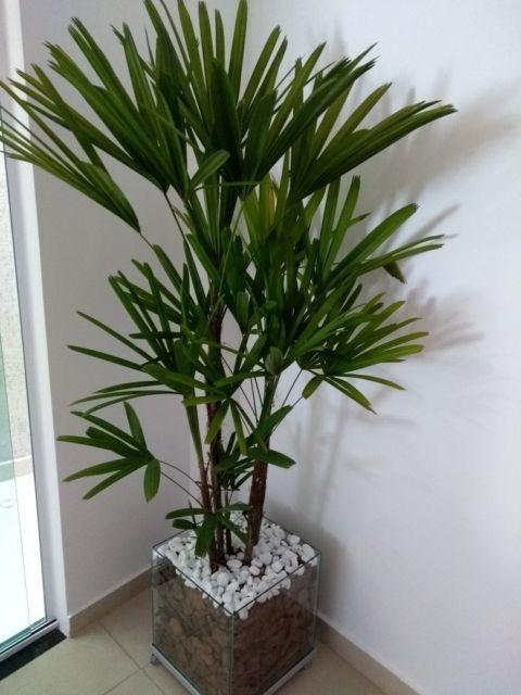 planta dentro de casa