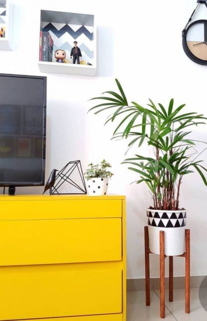 planta ornamental dentro de casa