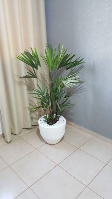 planta de vaso interior casa
