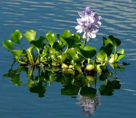 planta lago