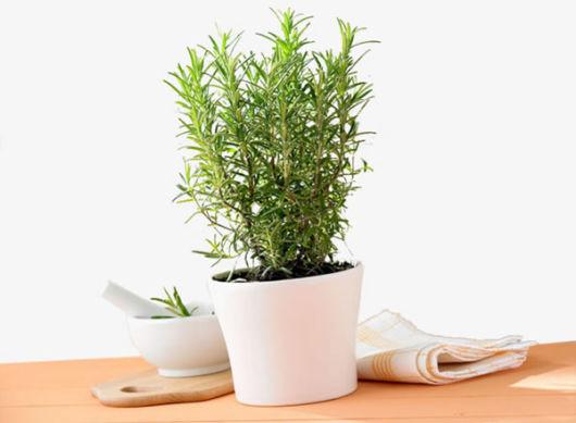 planta medicinal vaso