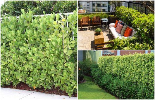 arbusto para jardim