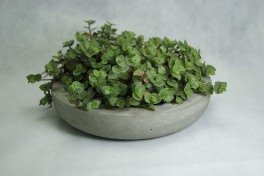 vaso pequeno com planta