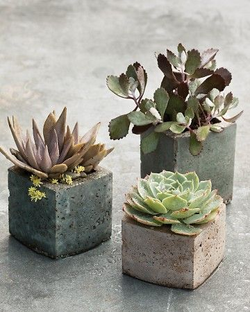 vasos quadrados com plantas