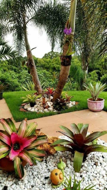 jardim externo com grama