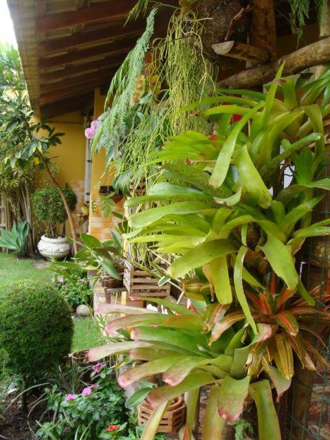 decoração vertical com plantas