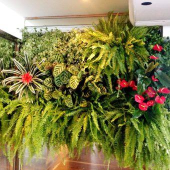 plantas jardim parede