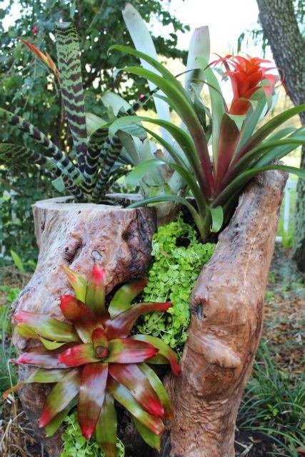 tronco seco com plantas