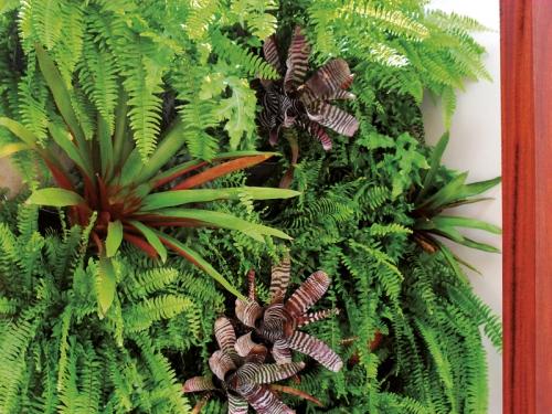 jardim vertical com samambaias e bromélias