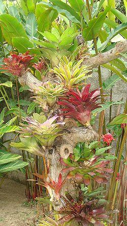 tronco de árvore com plantas