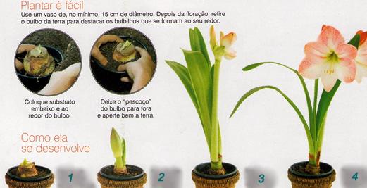 passo a passo de como plantar