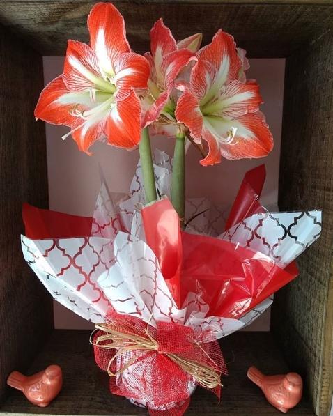 flor vermelha e branca