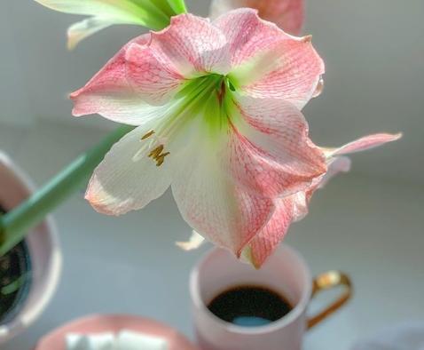 flor rosa e branca