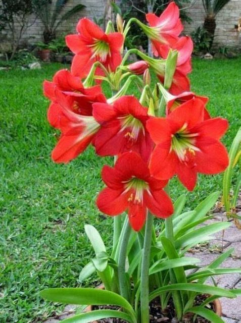 jardim com flores vermelhas