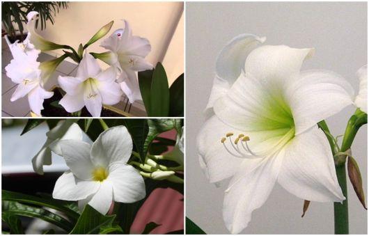 flores brancas